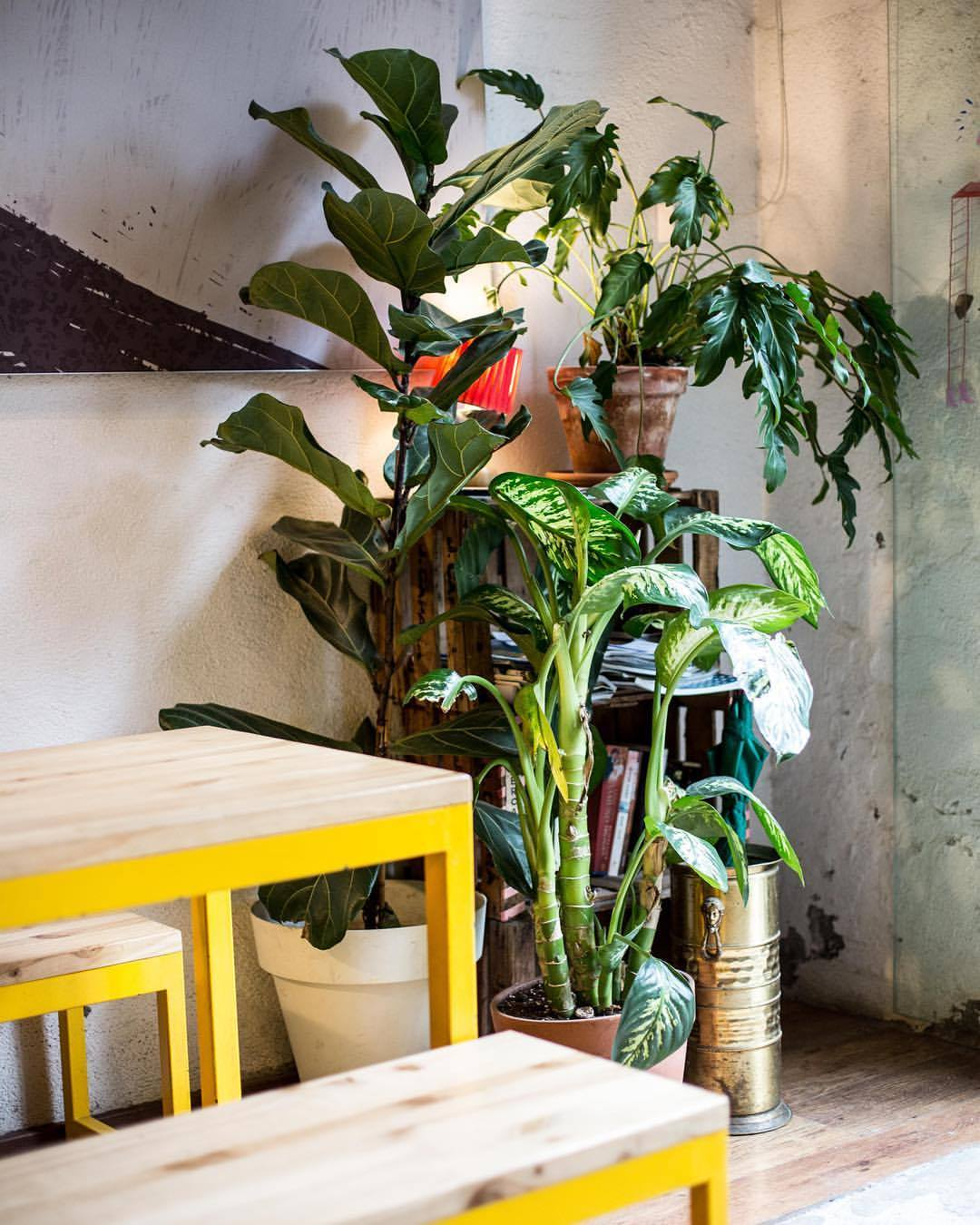 Cafetería Galería Cosmo