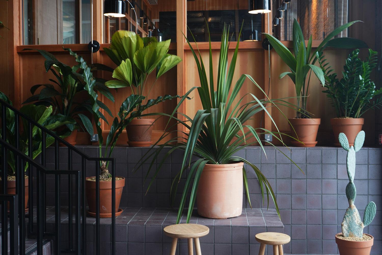 Studio Topic tienda de plantas